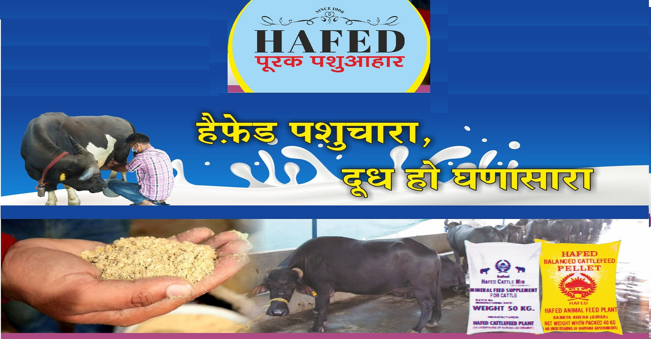 Hafed Cattle Feeds